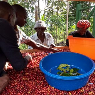 Coffee Gardens Uganda